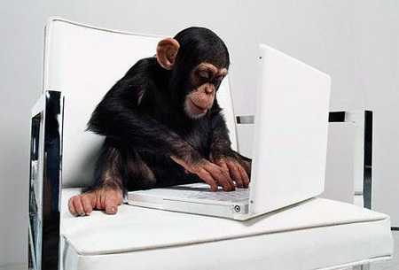 Photo of a monkey sitting at a computer.